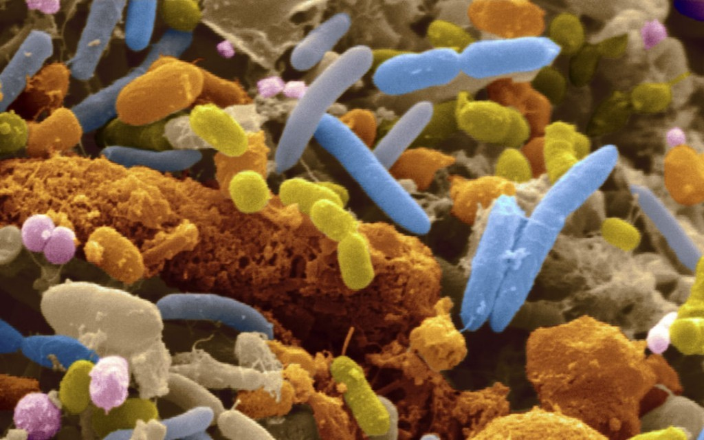 The Gut Microbiome – Vitality and Life Force